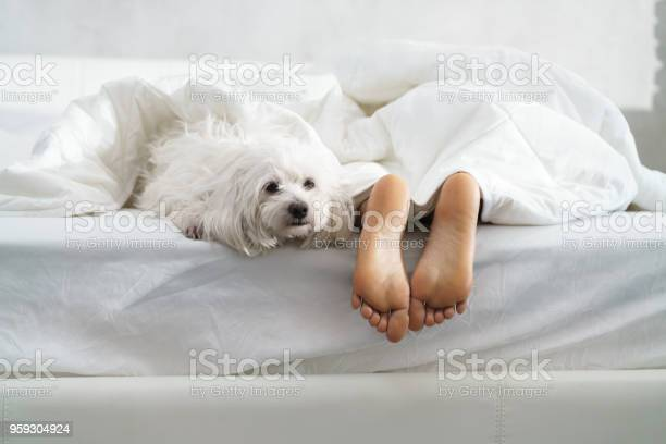 Black girl sleeping in bed with dog and showing feet picture id959304924?b=1&k=6&m=959304924&s=612x612&h=bciz8aep ycuhvknc8dz cylwbety3fkkzkzbpiulw8=