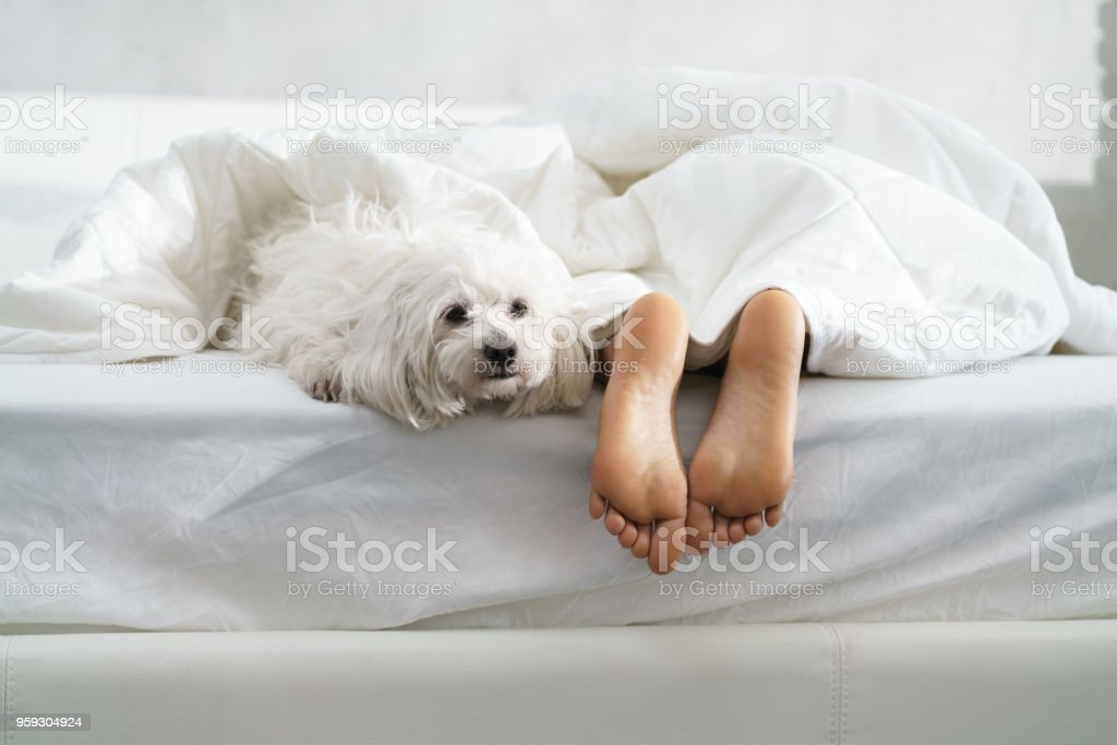 Black Girl Sleeping In Bed With Dog And Showing Feet stock photo