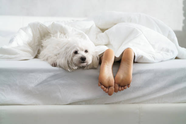 black girl sleeping in bed with dog and showing feet - łóżko zdjęcia i obrazy z banku zdjęć