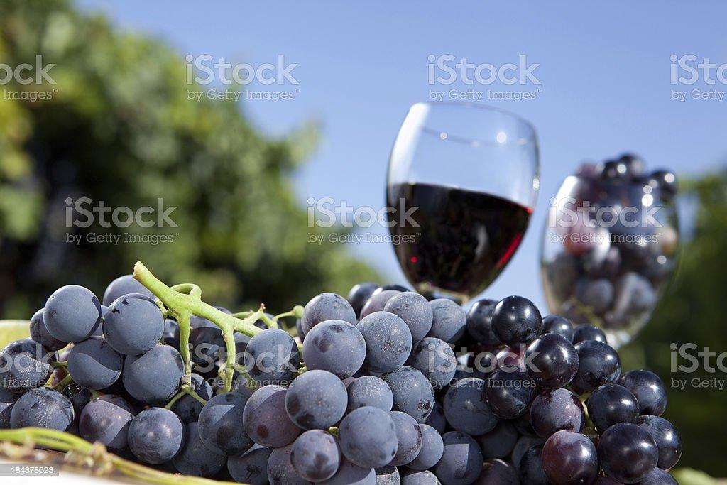 Black Grape and Wine royalty-free stock photo
