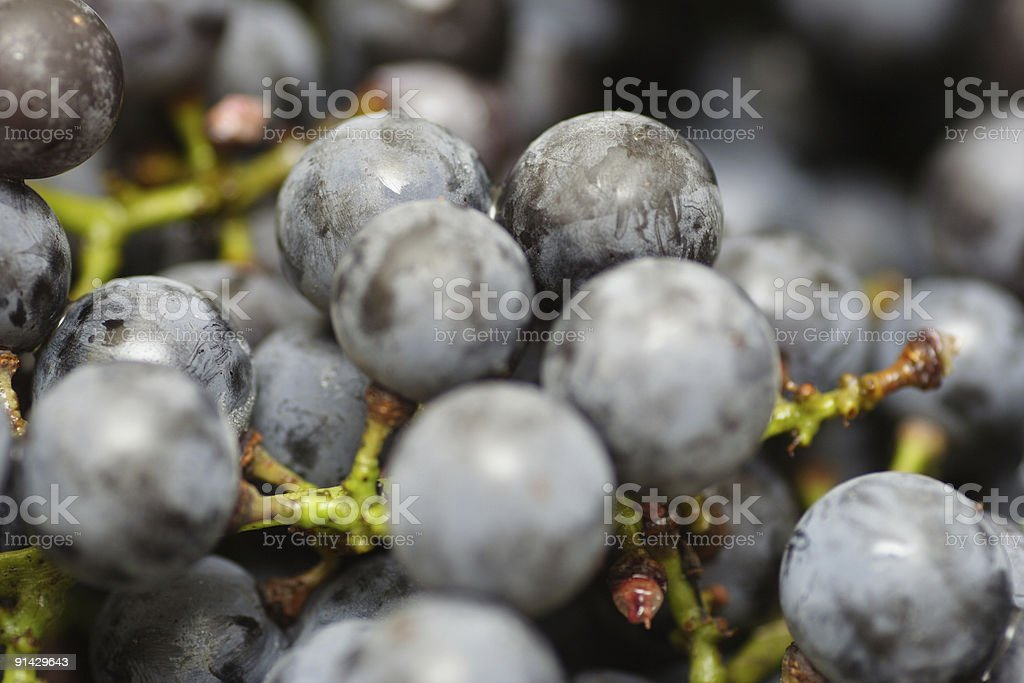 Black Grapes macro royalty-free stock photo