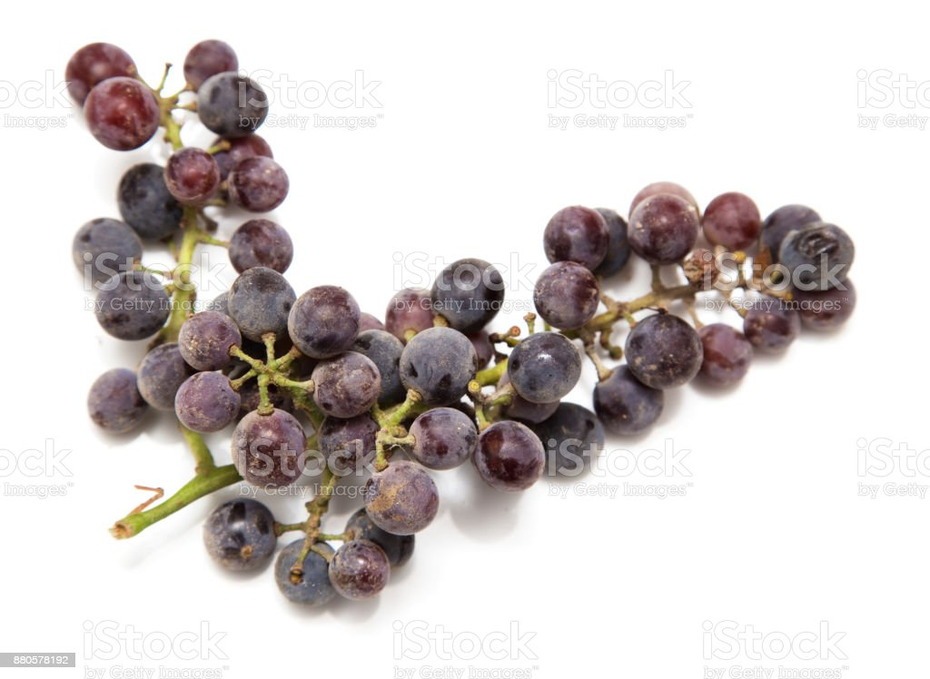 black grapes on a white background stock photo