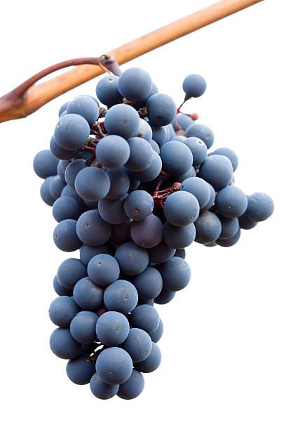 black grapes on white background stock photo