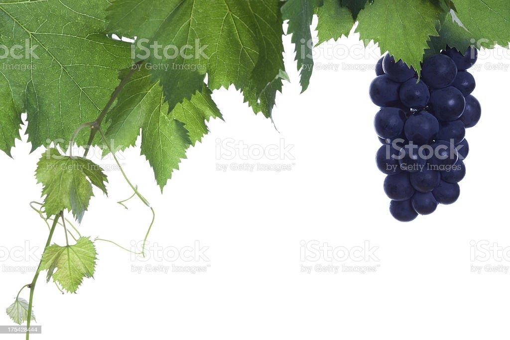 Black  grapes stock photo