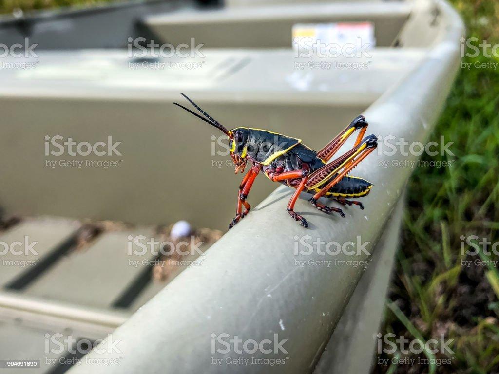 black grasshopper on a boat royalty-free stock photo