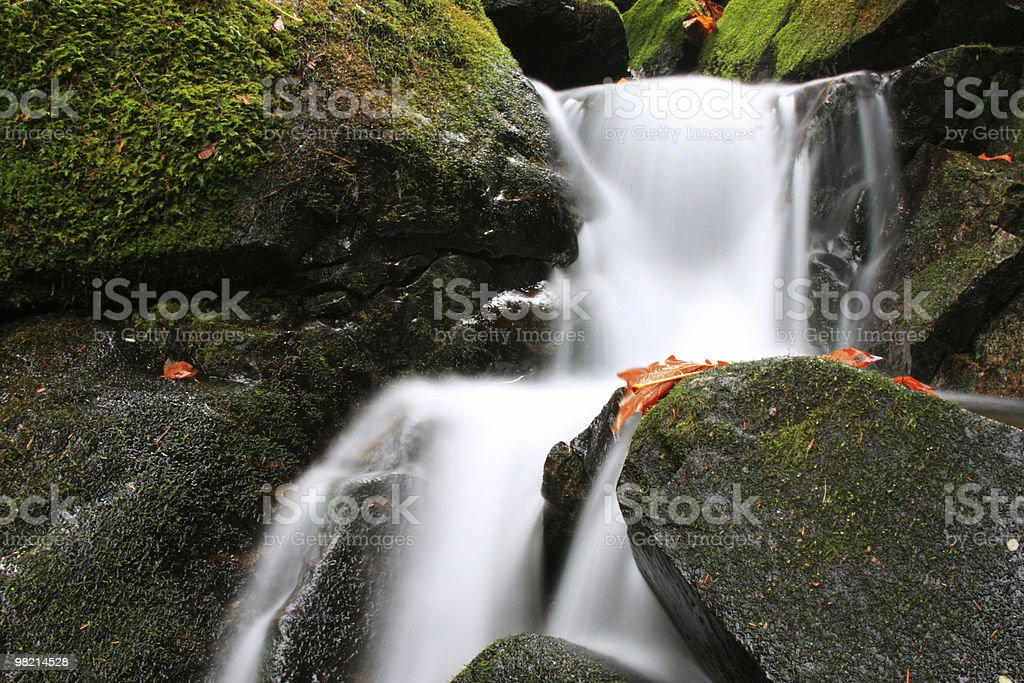 Black, Green, and White royalty-free stock photo