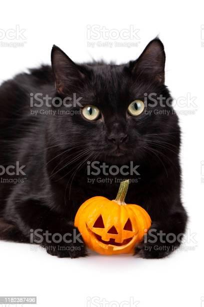 Black halloween cat picture id1182387496?b=1&k=6&m=1182387496&s=612x612&h=svhrvwzm19je8dz 2zhk quuzn5jzegswhy5qcgxalg=