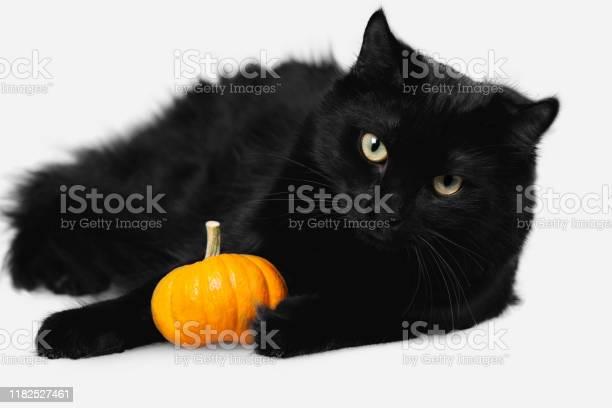 Black halloween cat picture id1182527461?b=1&k=6&m=1182527461&s=612x612&h=j437vb iybxsy 23mtj7ci5eozk3xvfzyad in8rve4=