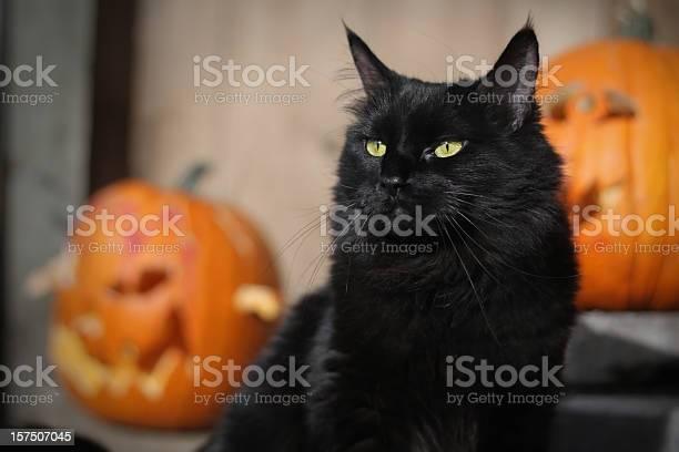Black halloween cat picture id157507045?b=1&k=6&m=157507045&s=612x612&h=8d8w89pyah9vajhwadhxgsbixub9aex pnbs4zwziyy=