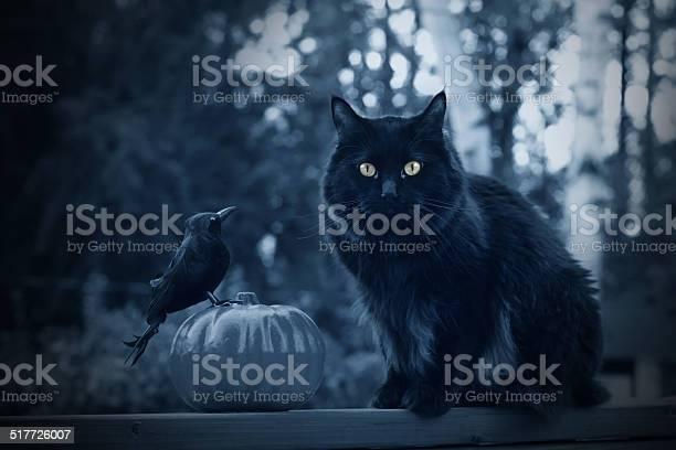 Black halloween cat picture id517726007?b=1&k=6&m=517726007&s=612x612&h=v0g1xrilyys81sgmuwuwfheehzvqtzxaykvylvn6owu=