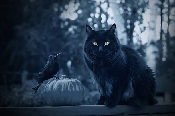 Black halloween cat picture id517726007?b=1&k=6&m=517726007&s=612x612&w=0&h=nldav6elqyislwq9gloe2ea5l6tij5yh0t2lkuaezzs=