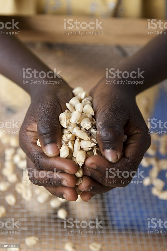 Black hands with corn stock photo