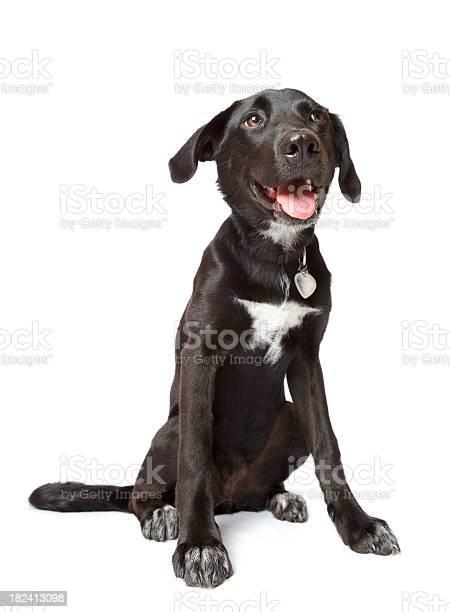 Black happy puppy picture id182413098?b=1&k=6&m=182413098&s=612x612&h=1ouewpfkphxywfm p3lod gb0g44y bko9vu7tby2be=