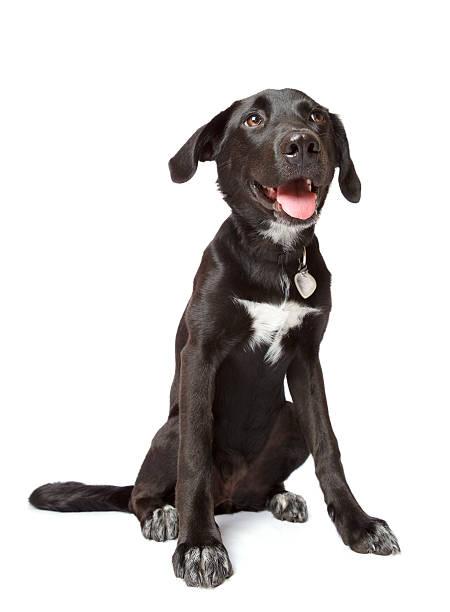 Black happy puppy stock photo