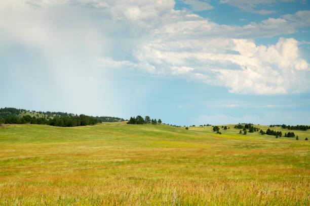 black hills south dakota - great plains stock photos and pictures