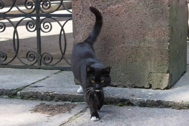 Black, homeless cat. stock photo