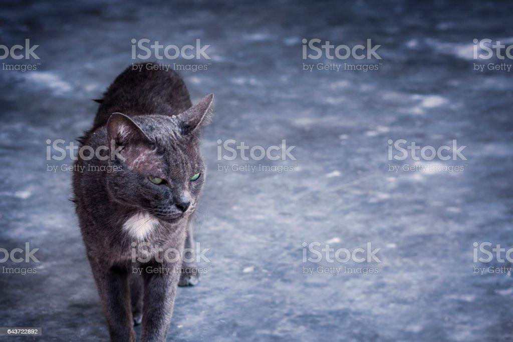 gatos pretos sem teto - foto de acervo