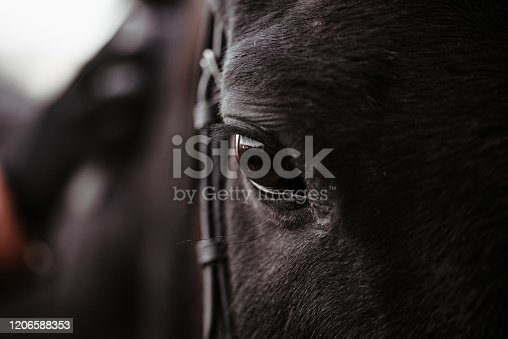 istock Black horse, eyes horse close up, black wild horse in natural background, portrait of horse, macro shot of a horse eye 1206588353