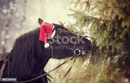 istock Black horse in a red Santa Claus hat eats fir-tree 860269454