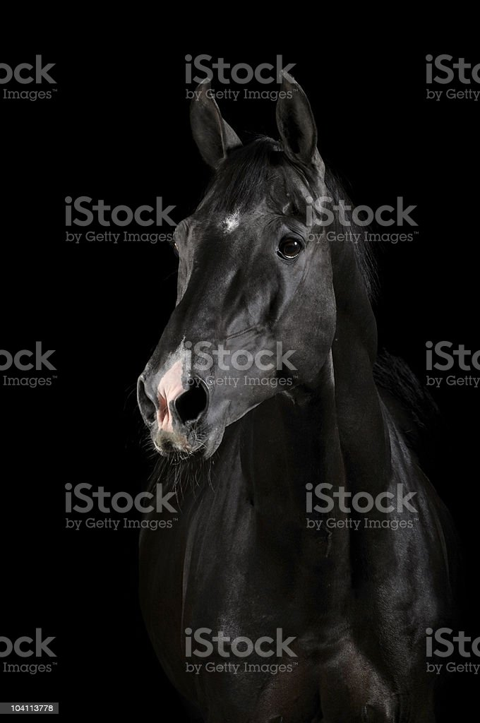 Black horse in darkness stock photo