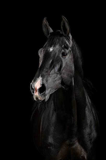 Czarny Koń w ciemności – zdjęcie