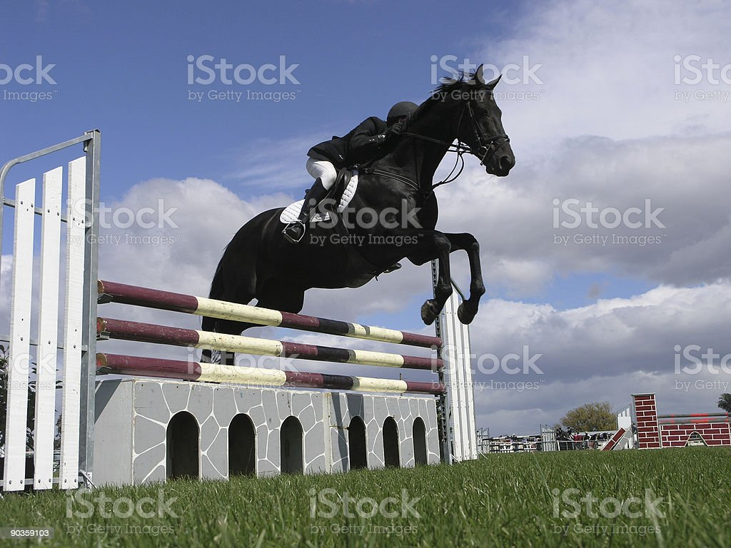 Black Horse Jumping Over Obstacle Stock Photo Download Image Now Istock