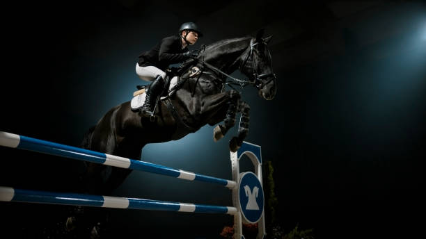 Black horse jumping rail with his rider picture id852132766?b=1&k=6&m=852132766&s=612x612&w=0&h= 9oswelgn0kkdhswskigwnchk1bavyocflsghadqdx0=