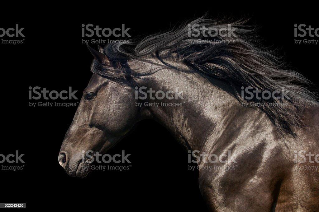 Black horse on black stock photo