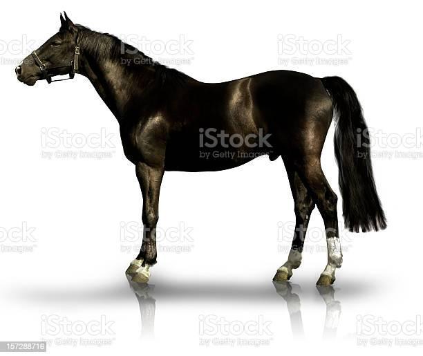 Black horse on white background picture id157288716?b=1&k=6&m=157288716&s=612x612&h=4srji b5vlt5c4hx0qwyy78qimmi4qzgwimujn aydq=