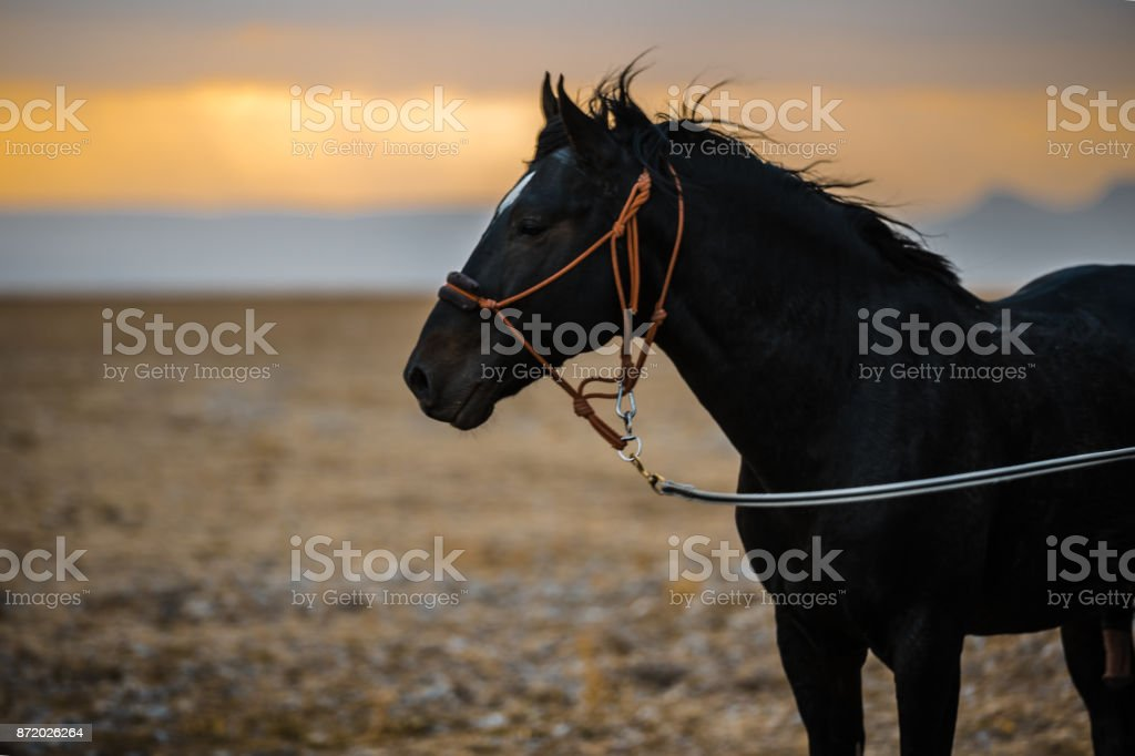 Black horse portrait outside with colorful autumn leaves in background stock photo
