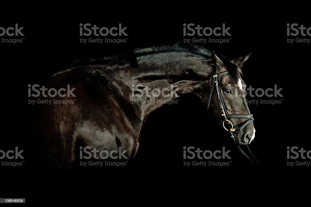 Portrait de cheval noir - Photo
