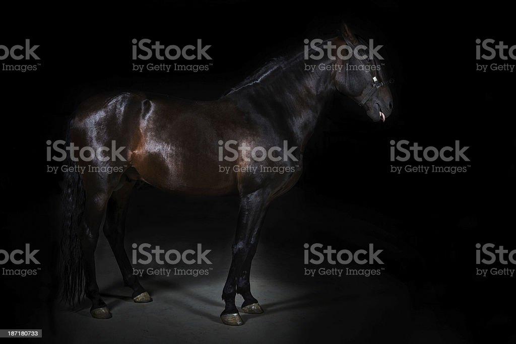 Black horse portrait. stock photo
