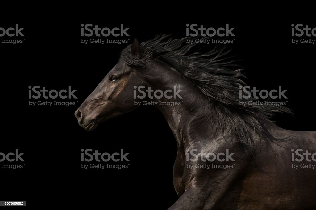Black Horse portrait run isolated on black background – Foto