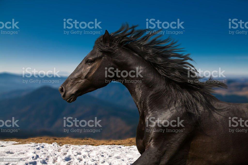 Black Horse portrait runs on the mountains background stock photo