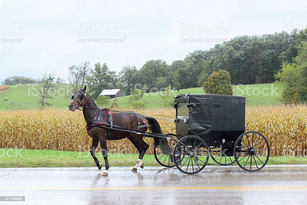 Black Horse Pulling Amish Buggy in Countryside in Ohio stock photo