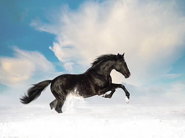 Noir Cheval de course dans la neige - Photo