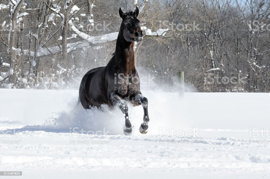 Black Horse Running At Camera In White Snow Stock Photo Download Image Now Istock