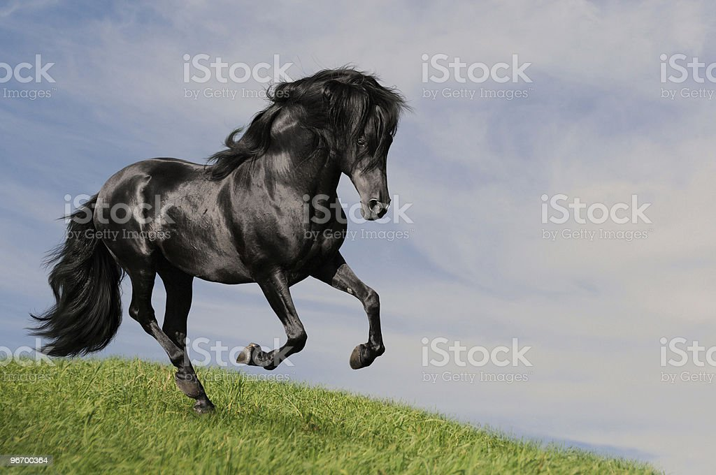 black horse stallion run gallop om the meadow, collage paint stock photo
