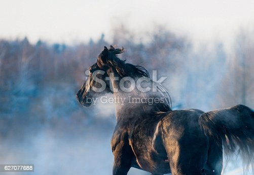 istock black horse winter portrait in action 627077688