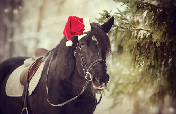 Black horse with firtree branches in a a red santa claus hat picture id859898126?b=1&k=6&m=859898126&s=612x612&w=0&h=ejfg6jktt2ysitqzg1tswtpvitpr9prwrqkhus165hw=