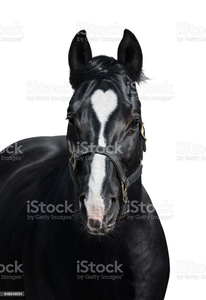 Black horse with heart mark on white background. Unigue and rare colored. stock photo