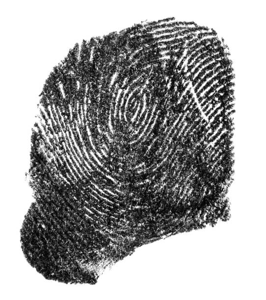 black ink fingerprint isolated on a white background - deductive stock pictures, royalty-free photos & images