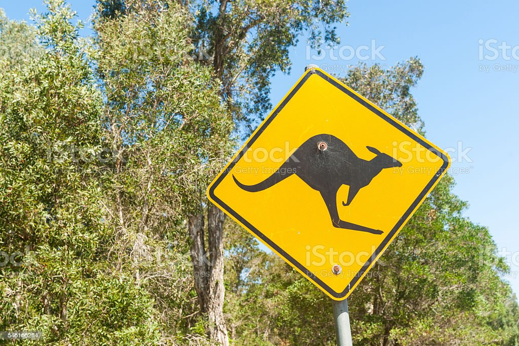 Black kangaroo on yellow reflective  warning sign stock photo