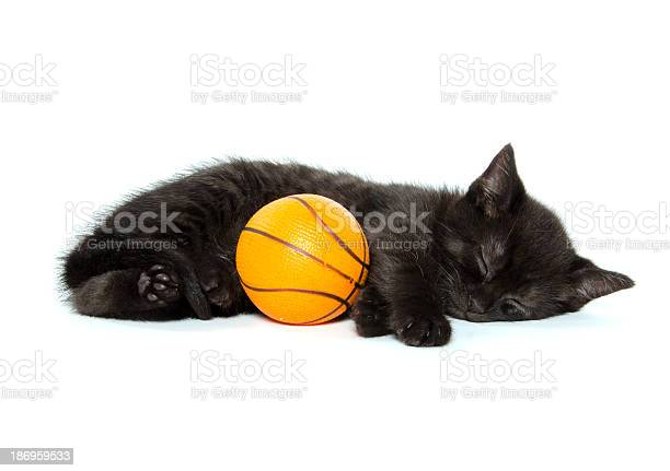 Black kitten and basketball picture id186959533?b=1&k=6&m=186959533&s=612x612&h=qmherpufphwvtvb1douhrjuofn48ghf3jd6ejfc7izy=