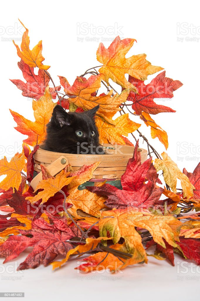 black kitten and fall leaves stock photo