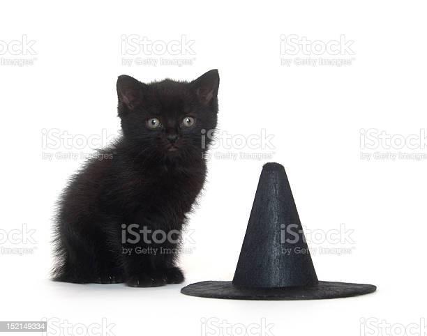 Black kitten and witch hat picture id152149334?b=1&k=6&m=152149334&s=612x612&h=jwebq0sp1bba8ux7bmjx3dwm1upuzpj1t4b7v3rz9wa=