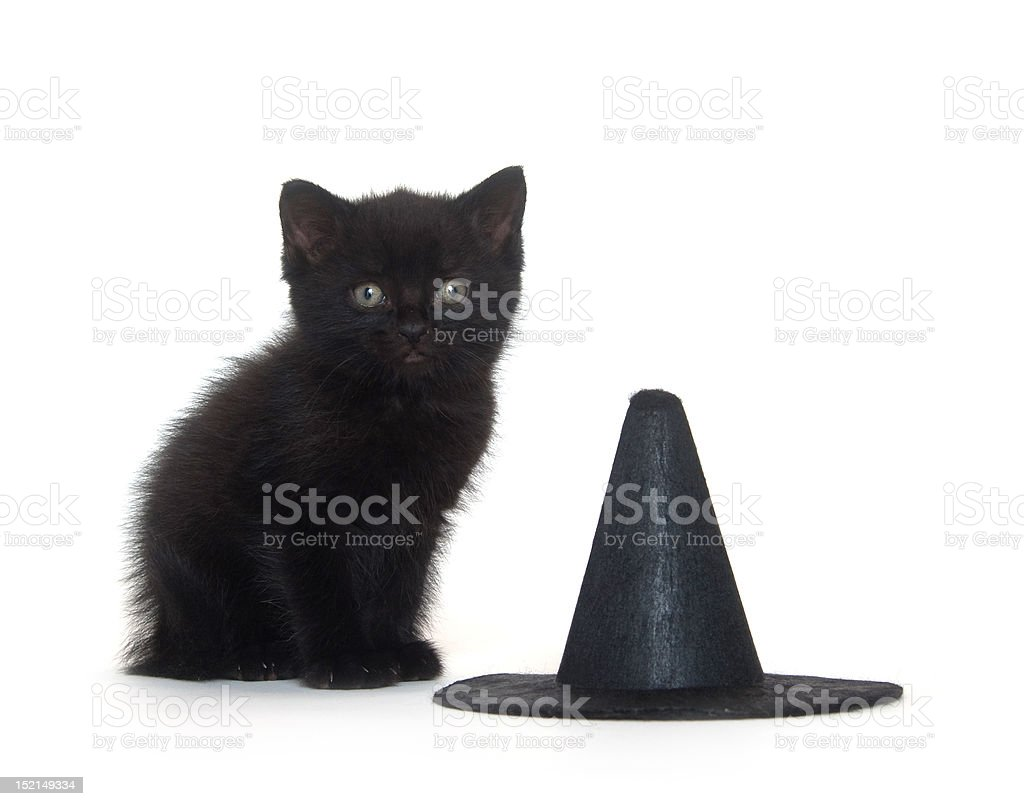 Black kitten and witch hat stock photo