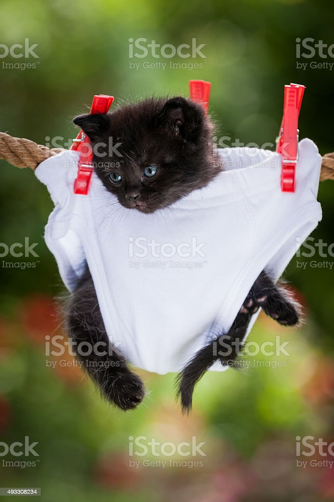 Black kitten hanging in panties on the rope stock photo