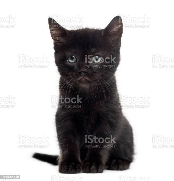 Black kitten in front of a white background picture id889655118?b=1&k=6&m=889655118&s=612x612&h=optgajy2y3881l9gpdfdjjbaxwp2q3unuhos l2zaos=