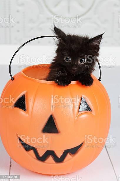 Black kitten in jackolantern picture id171333781?b=1&k=6&m=171333781&s=612x612&h=8lcdtsxdlbxfnri2x4kbfmhvzubuetydkbxrg9e dsk=
